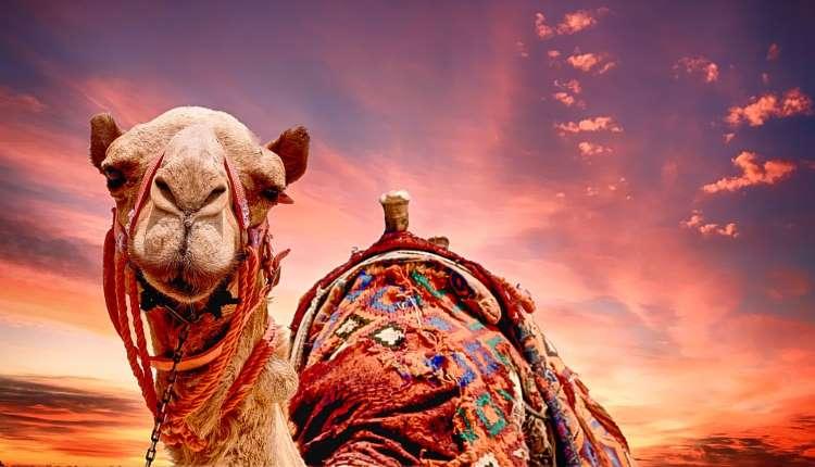 hadith camel urine dr khalid zaheer