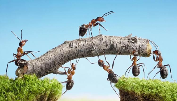 quran ants talk